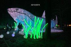 Le grand requin blanc, à l'exposition «Océan en Voie d'Illumination» du Jardin des Plantes de Paris (5ème)