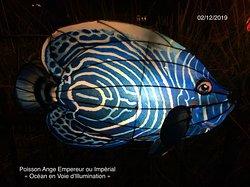 Poisson Ange Empereur ou Impérial à l'exposition «Océan en Voie d'Illumination» du Jardin des Plantes de Paris