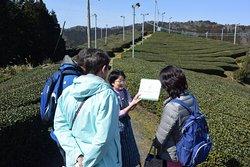 Beautiful tea field in the sky