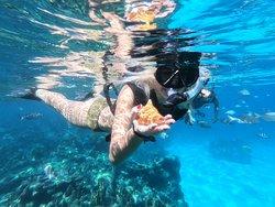 Snorkeling Laguna maya