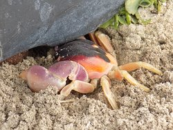 Check out the crab at the base of the planters. Look but don't touch!