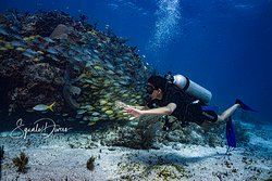 Cancun´s Reefs & dive sites are perfect to learn how to scuba and for those hardcore divers seeking for new adventures. wreck dives , night dives and more in cancun marine national Park