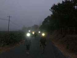 Wine club members returning from early morning harvest picking donned in headlamps