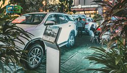 Toyota car show