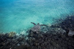 Turtles on the beach!