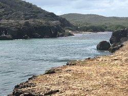 Sea turtle spotting