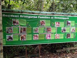 Fun watching the Orangutans near Kuching