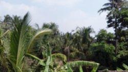 Mandarmani village