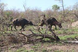 Kruger National Park Day Tours