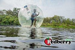 Run on water! Enjoy the Bubble ball on the farm dam
