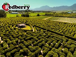 Discover the secrets of a strawberry in the world's largest permanent hedge maze in the Southern Hemisphere