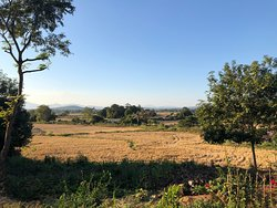 view to the rice field from resort property