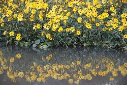Bayou blooms