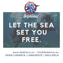 Delphinus Diving School