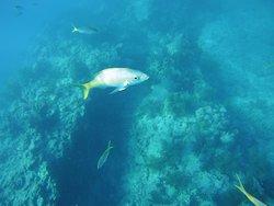 Captain pips snorkeling trip