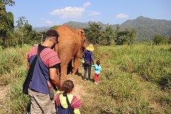 Hiking with Elephants.