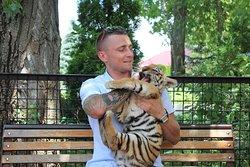 Необыкновенный зоопарк, обязательно сюда вернусь потискать этих маленьких тигрят )
