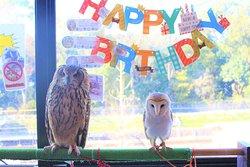 今日はきぃちゃん5歳のお誕生日です☆ Today is Kii's 5th birthday☆
