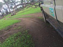 Rain season in Ruaha
