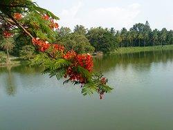 lalbagh lake
