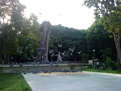 Birds place lalbagh