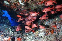 Diving, Fishlife