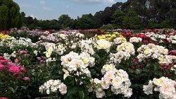 5. Victoria Esplanade Gardens