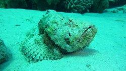 Een van de onderwater foto's gemaakt