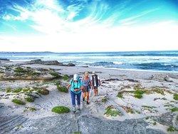 Guided seashore walks
