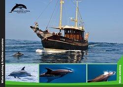 Bussard & cetaceans OceanExplorer La Palma   www.oceanexplorer.es