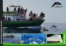OceanExplorer La Palma