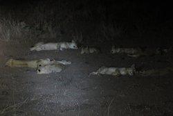 nachtsafari