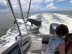 You always have the best seat when you book your private dolphin tour with Banyan Charters