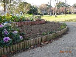 2019/12/18_税金を使った協働市民講座「バラの栽培」を市民に指導しているこの公園ボランテイア達が、2年前に植えまくったバラ花壇。見事に、更地です。  しかも、また花壇に土を盛り上げています。 この公園花壇を作っているおばちゃん達は、ウオータースペースとか、おしゃれな園芸用語を 知らないらしい。 実際のところ『バラは、買って植えて、枯れたら終わり』が、この公園美化ボランテイアの経験と、蓄積された知識と常識のようですね。 メルヘンを語る市民講座では、かれらは何を語っているんだろう?