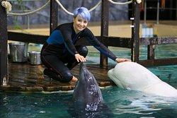 Общение с дельфинами и китами