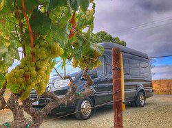 Perata Luxury Tours Napa & Sonoma