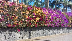 Colourful Playa blanca