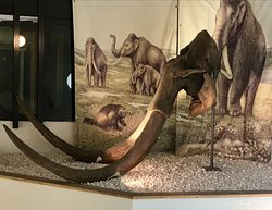 Cast of a mammoth's skull that was found in Ilford
