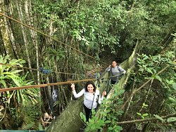 Walking around the jungle and going the canopy!