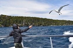Hermoso paseo en barco donde se le puede dar de comer a las gaviotas !!!  Comen muchas veces !!!