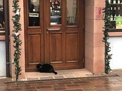 開けて欲しい黒ネコ