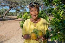 Collecting fruits at Ohorongo Lodge