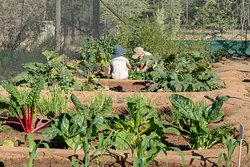 Vegetable patch at Ohorongo Lodge