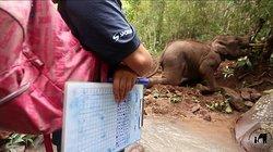 6days/5nights Volunteering Kindred Spirit Elephant Sanctuary Chiang Mai