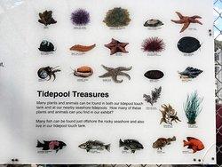 Tidepool Treasures
