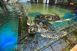 Sea Turtle Farm and Hatchery - Habaraduwa