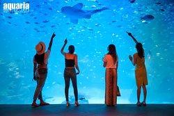 Aquaria Phuket Thailand
