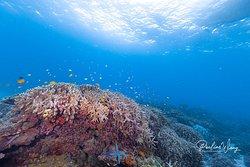 Beautiful reefscape in Apo island
