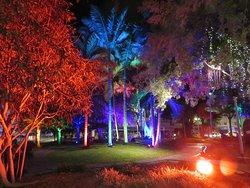Autres illuminations d'arbres plantés sur la place des Cocotiers.