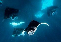 Maldivers Diving Centre